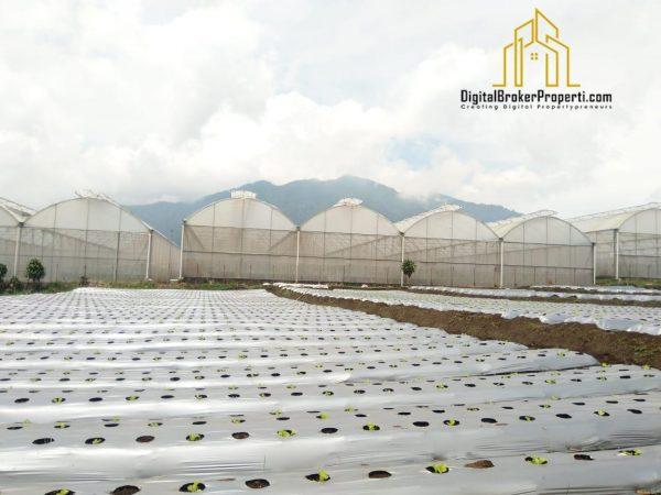 Jual Cepat Tanah di Cisarua Bandung, Dataran Tinggi View bagus dan Dingin, Cocok Untuk Hidroponik